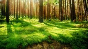 Forest-Wallpaper-HD