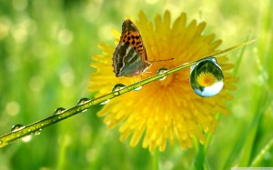 butterfly-water-drops-wallpapers